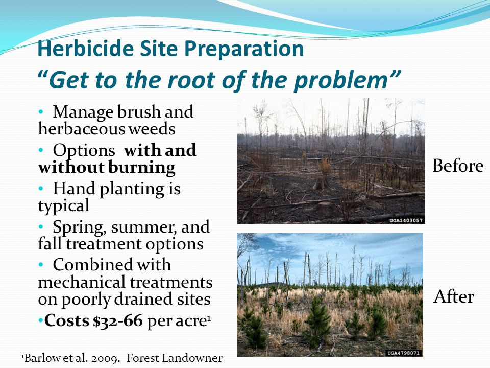 Herbicide Site Preparation Get to the root of the problem