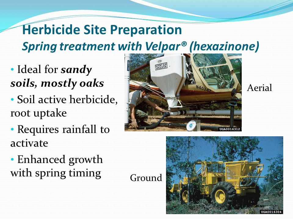 Herbicide Site Preparation Spring treatment with Velpar® (hexazinone)