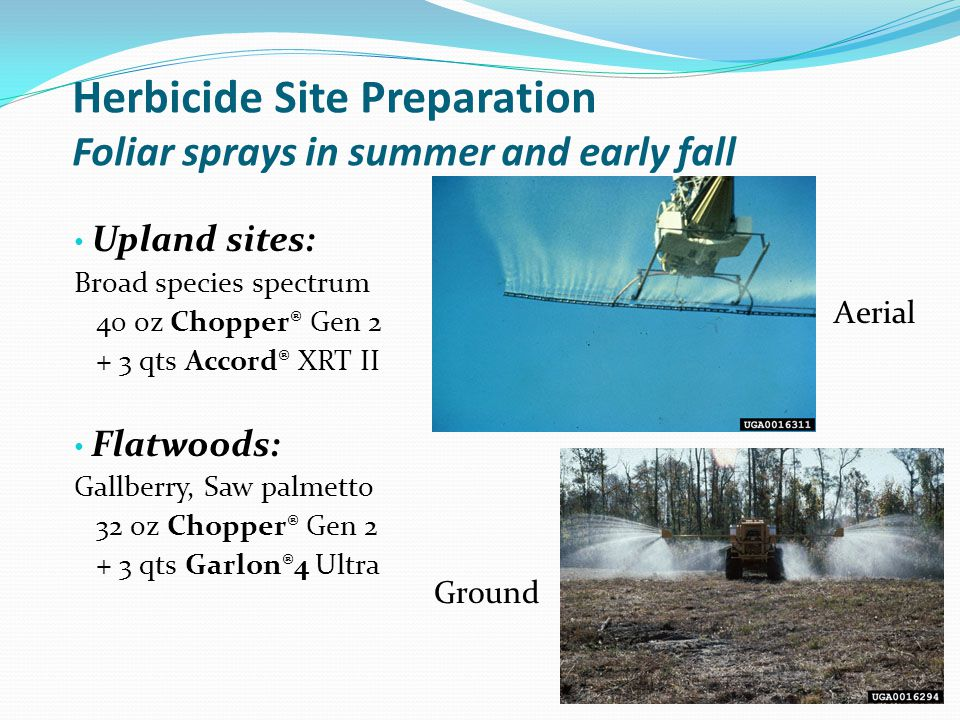 Herbicide Site Preparation Foliar sprays in summer and early fall