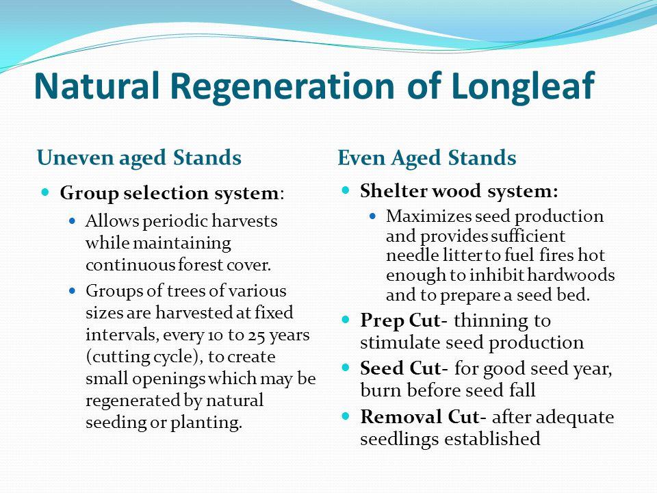 Natural Regeneration of Longleaf