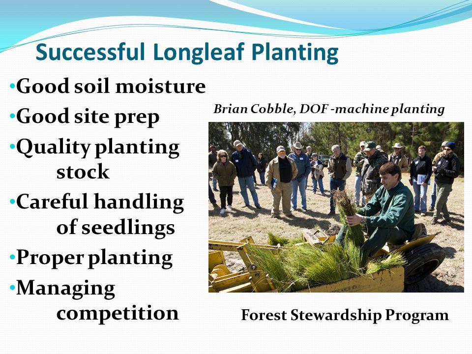 Successful Longleaf Planting