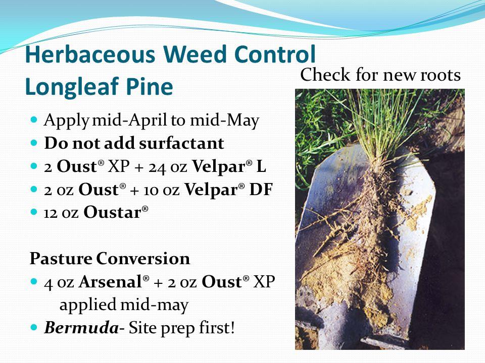 Herbaceous Weed Control Longleaf Pine