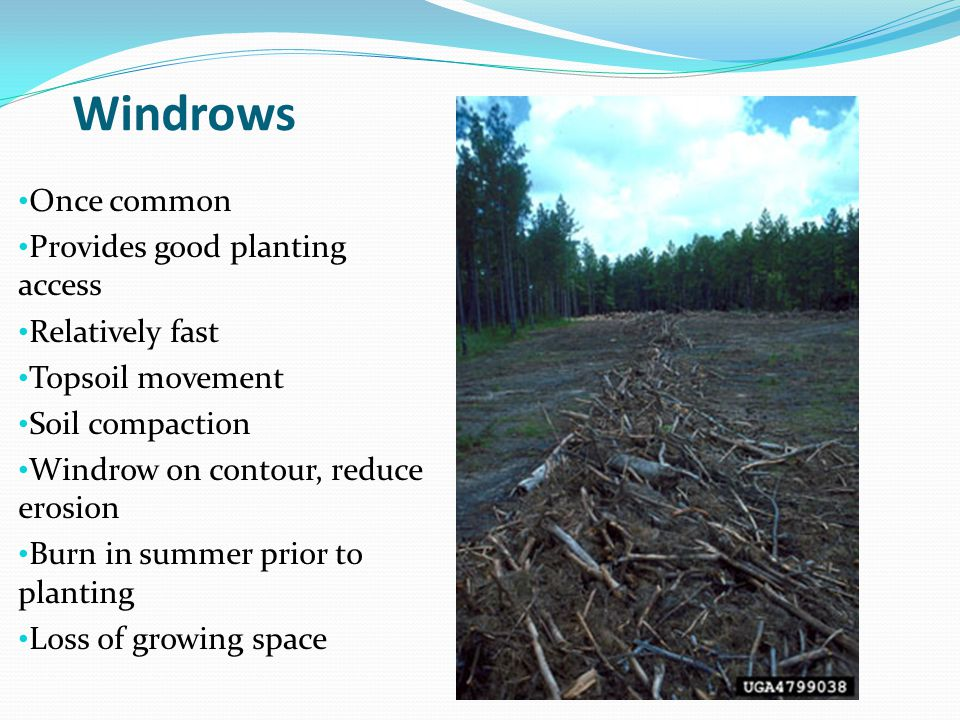 Pine Silviculture Site Preparation And Planting Longleaf