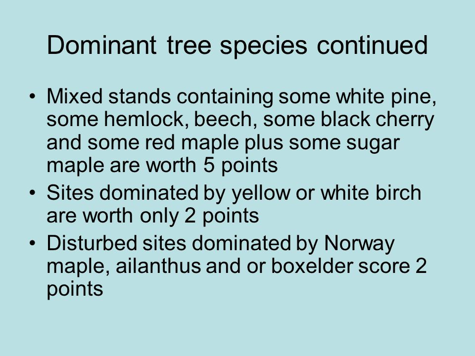 Dominant tree species continued