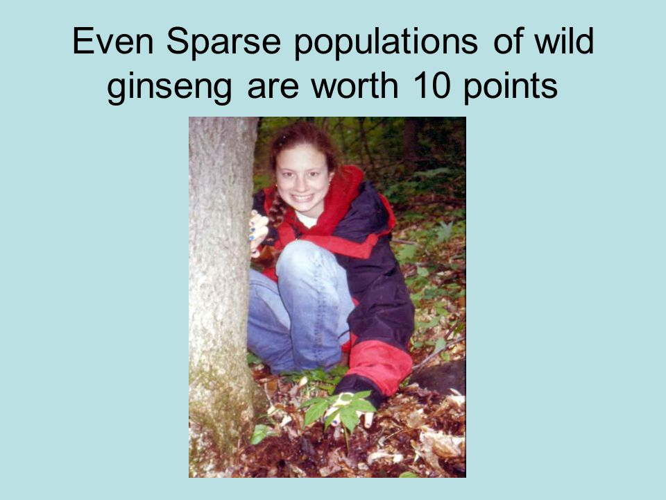 Even Sparse populations of wild ginseng are worth 10 points