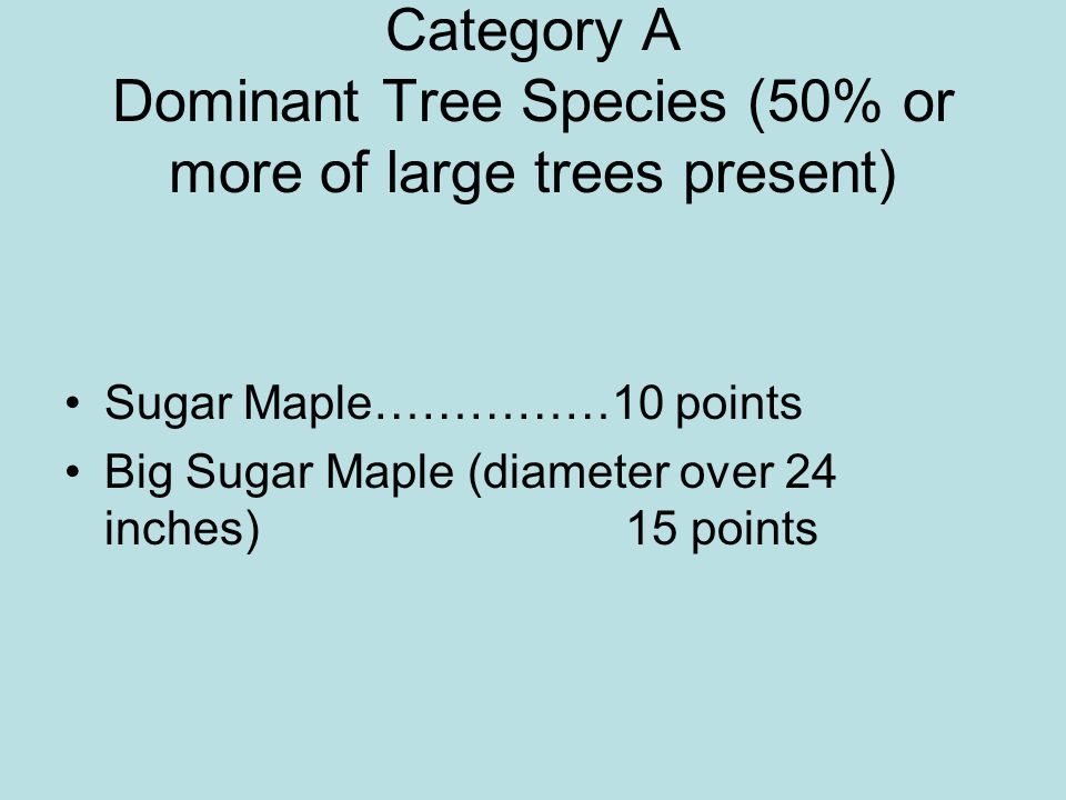 Category A Dominant Tree Species (50% or more of large trees present)