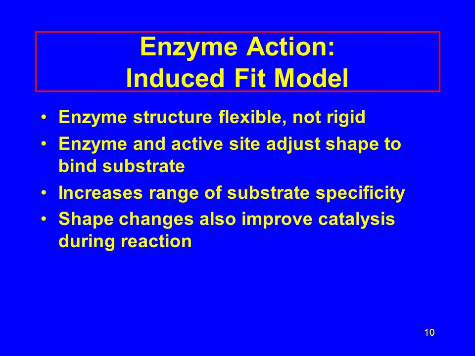 Enzyme Action: Induced Fit Model