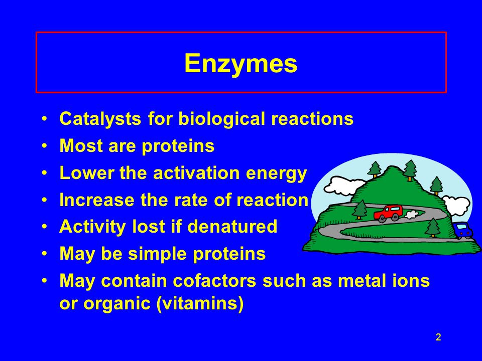 Enzymes Catalysts for biological reactions Most are proteins
