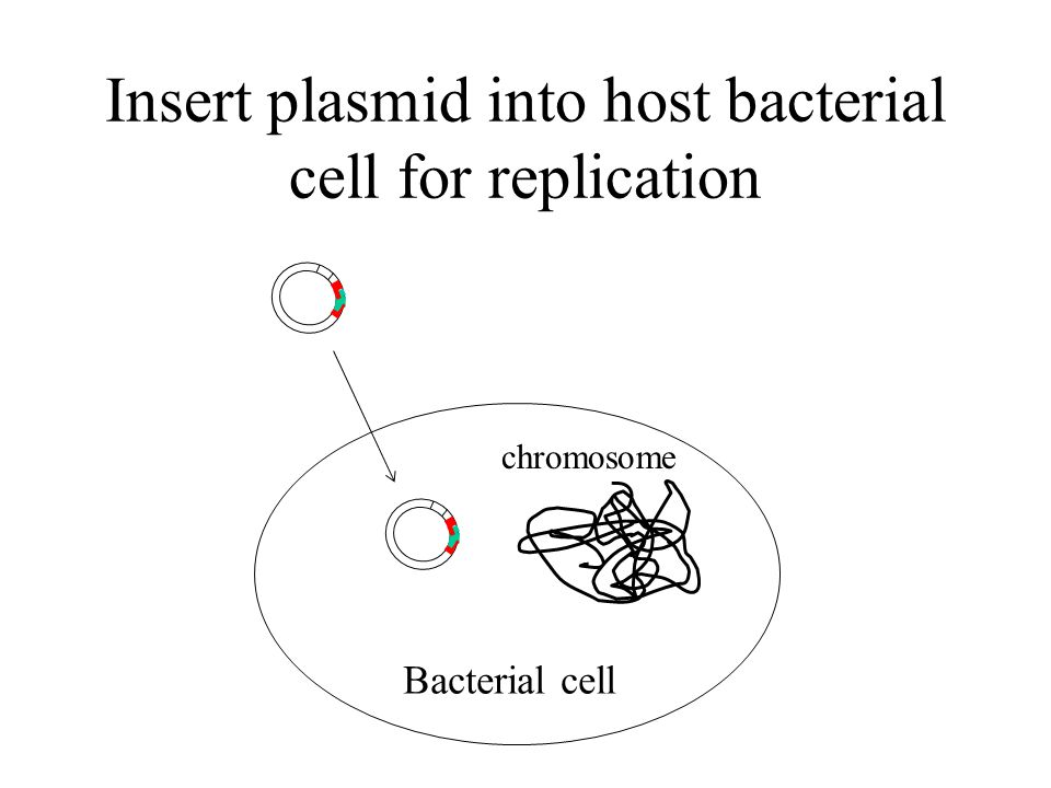 Insert plasmid into host bacterial cell for replication