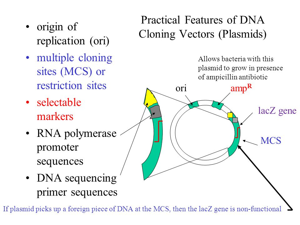 Practical Features of DNA Cloning Vectors (Plasmids)