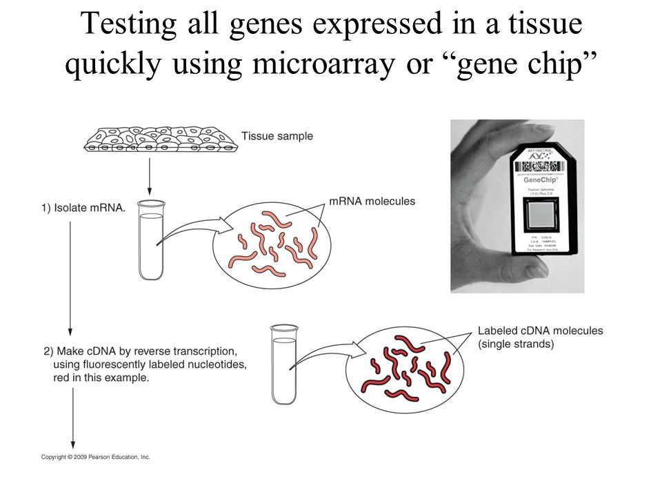 Testing all genes expressed in a tissue quickly using microarray or gene chip
