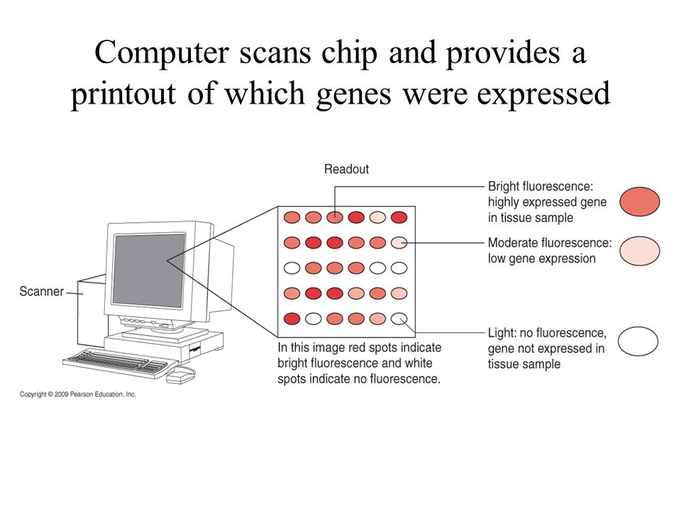 Computer scans chip and provides a printout of which genes were expressed