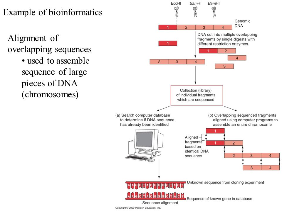 Example of bioinformatics