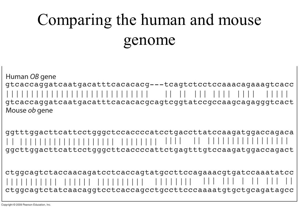 Comparing the human and mouse genome