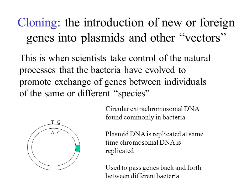 Cloning: the introduction of new or foreign genes into plasmids and other vectors