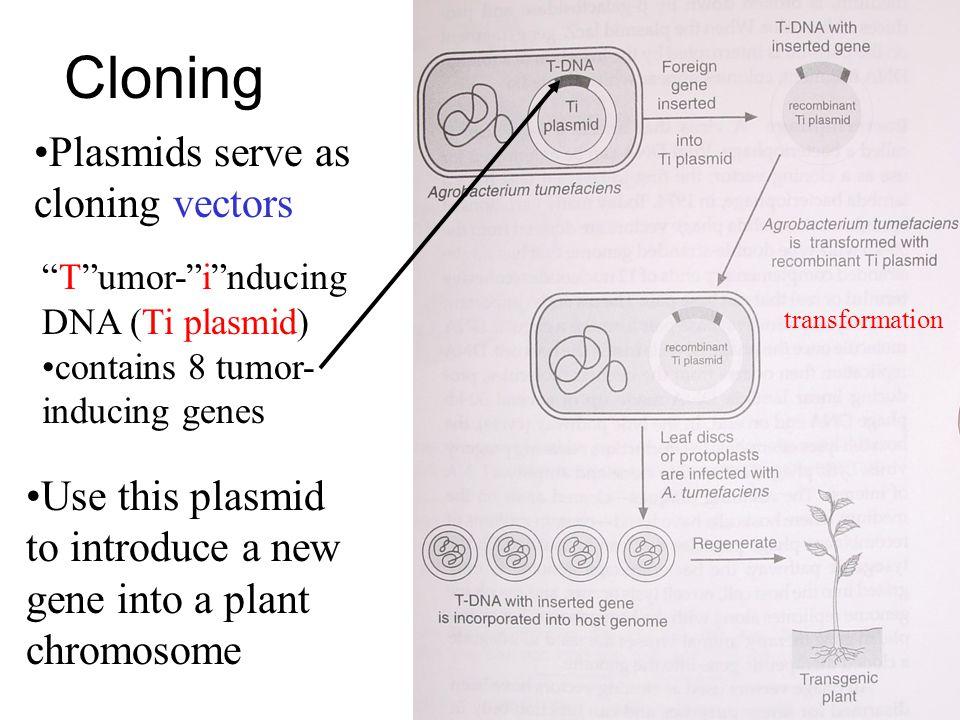 Cloning Plasmids serve as cloning vectors
