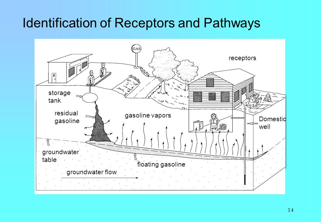 Identification of Receptors and Pathways