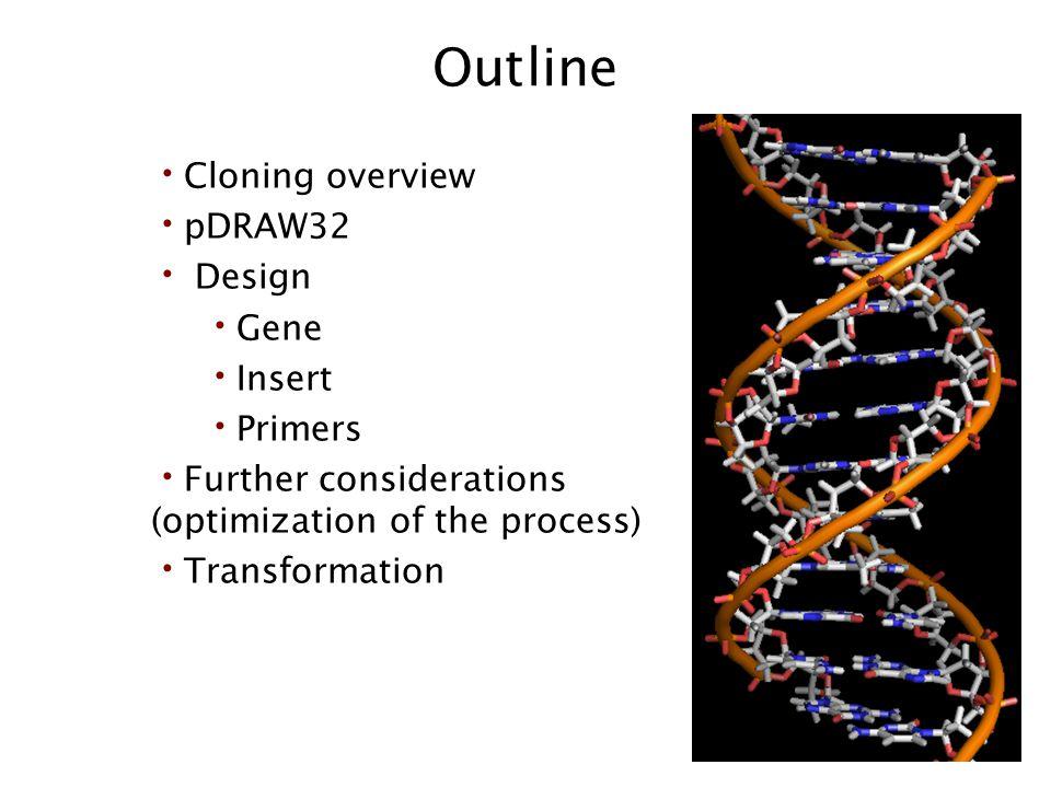 Outline Cloning overview pDRAW32 Design Gene Insert Primers