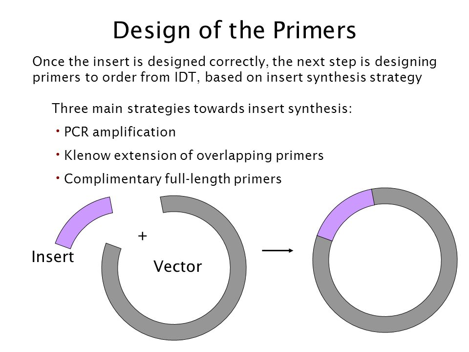 Design of the Primers + Insert Vector