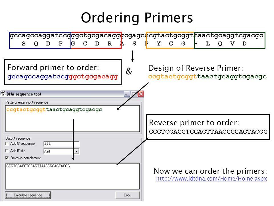 Ordering Primers & Forward primer to order: Design of Reverse Primer: