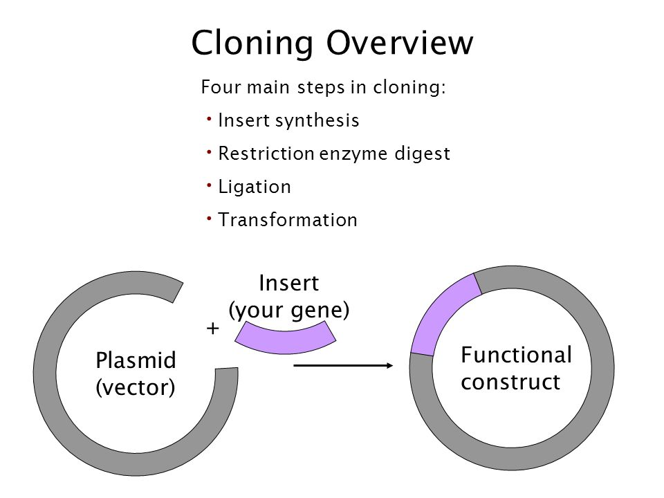 Cloning Overview Insert (your gene) + Functional Plasmid construct