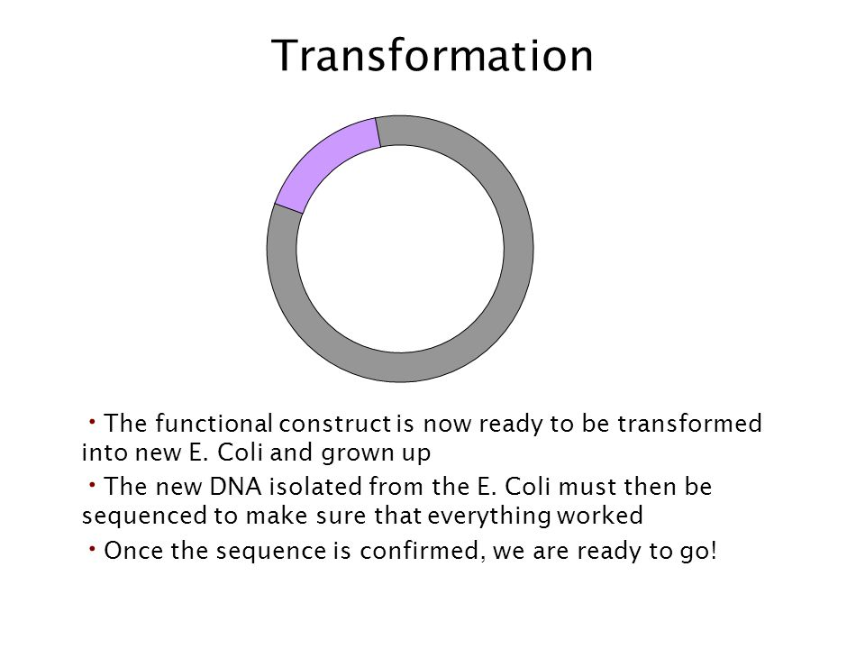 Transformation The functional construct is now ready to be transformed into new E. Coli and grown up.