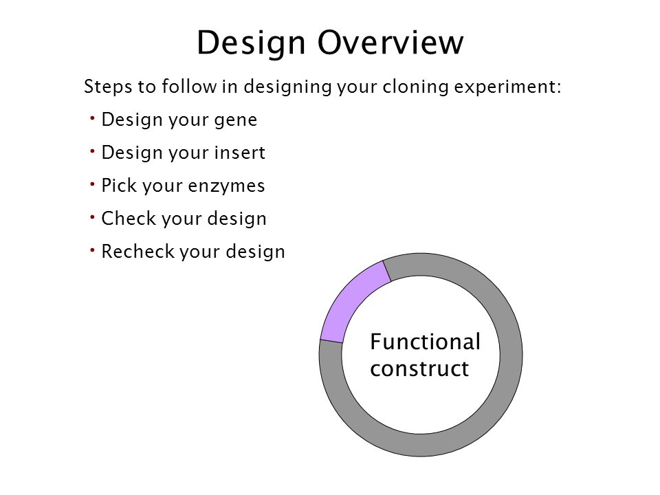 Design Overview Functional construct