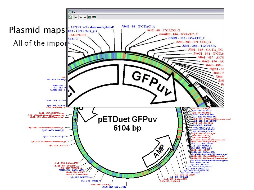 pDRAW32 Plasmid maps: pDRAW32