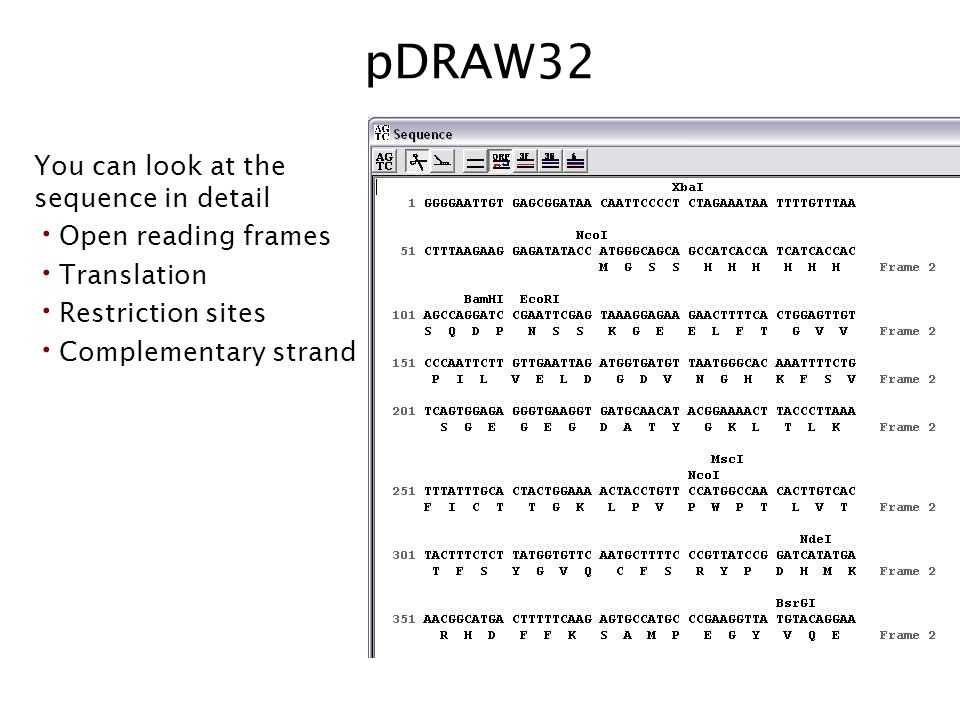 pDRAW32 You can look at the sequence in detail Open reading frames