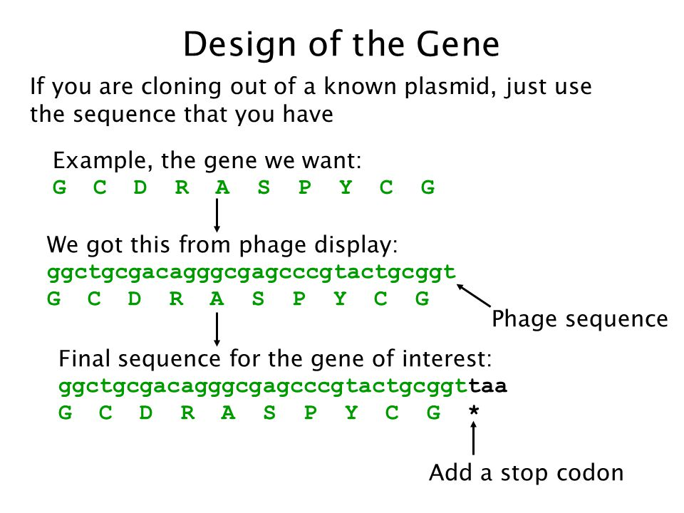 Design of the Gene If you are cloning out of a known plasmid, just use the sequence that you have. Example, the gene we want: