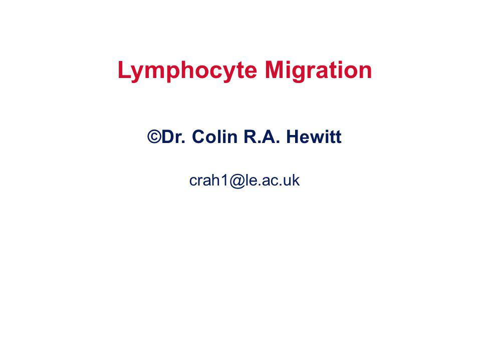 Lymphocyte Migration ©Dr. Colin R.A. Hewitt crah1@le.ac.uk
