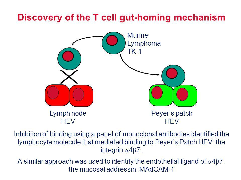 Discovery of the T cell gut-homing mechanism
