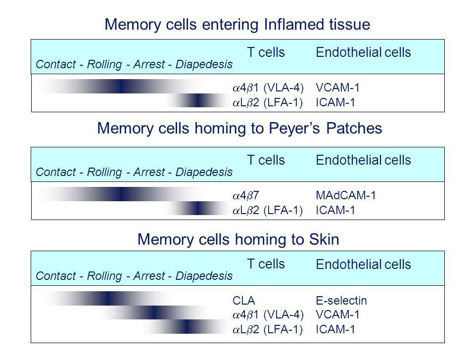 Memory cells entering Inflamed tissue