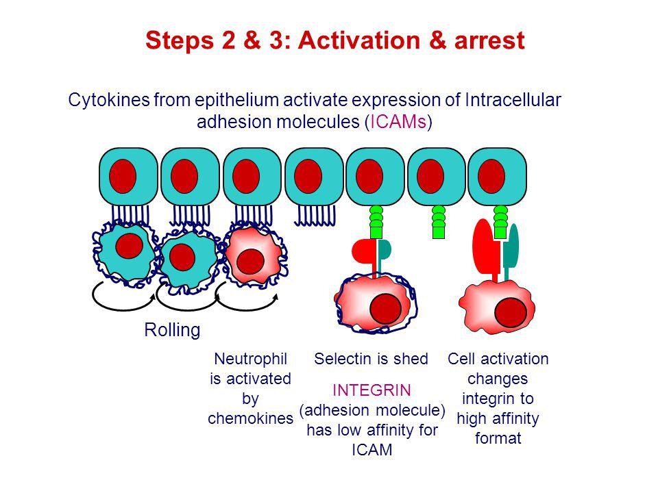 Steps 2 & 3: Activation & arrest