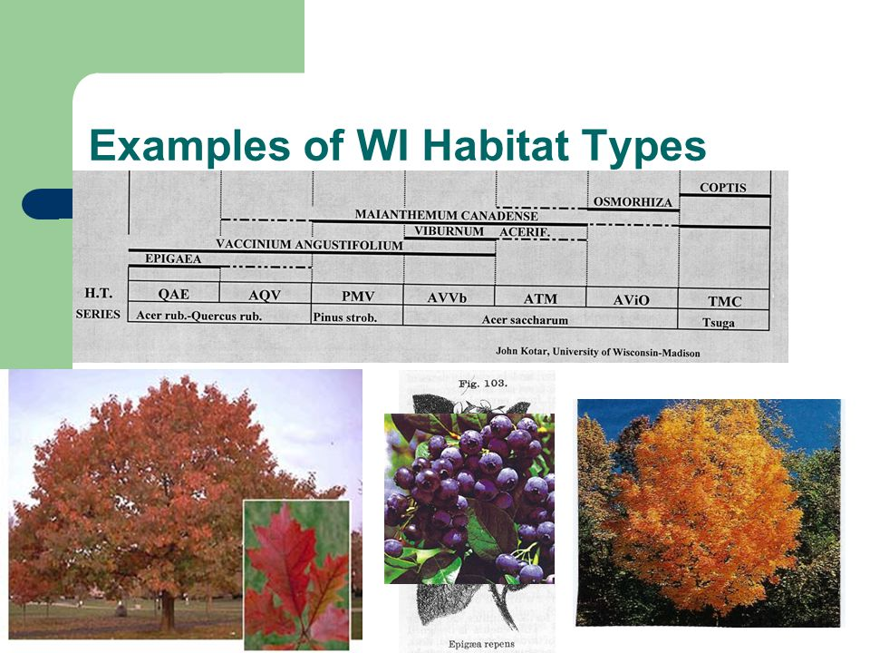Examples of WI Habitat Types