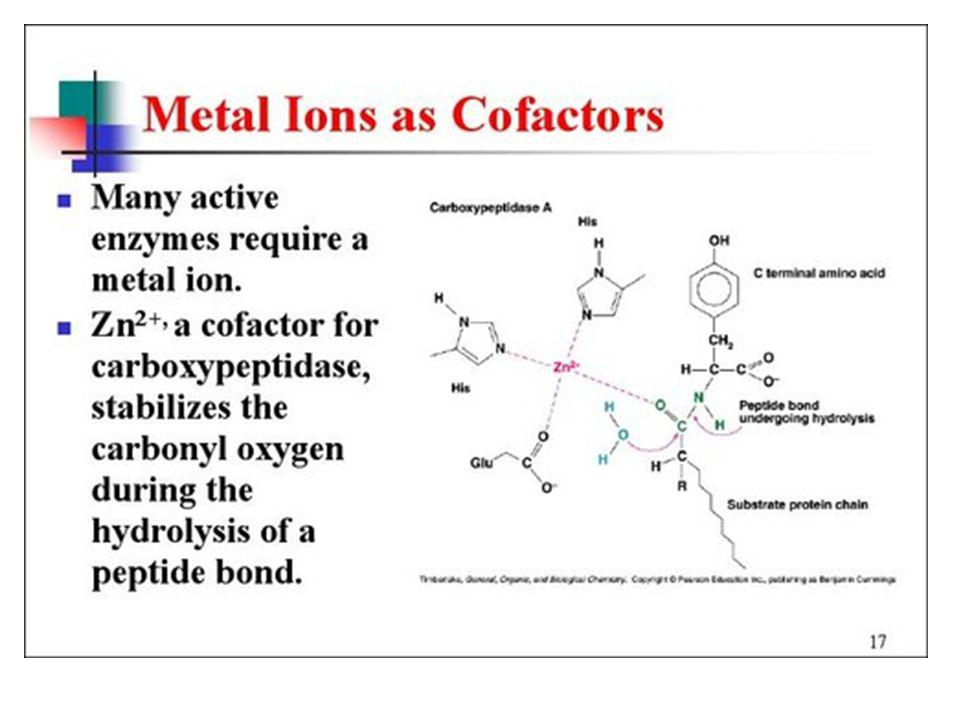 Enzymes - Cofactors Metal ions present in trace amounts
