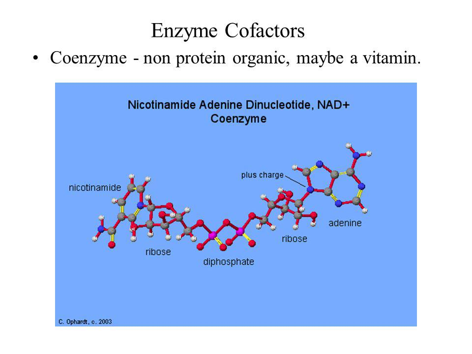 Enzyme Cofactors Coenzyme - non protein organic, maybe a vitamin.