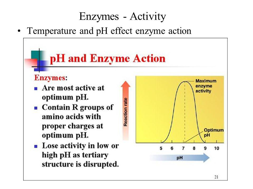 Enzymes - Activity Temperature and pH effect enzyme action