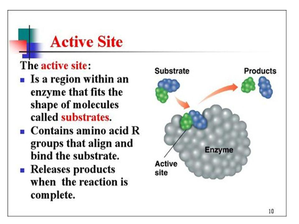 Enzyme Active Site Amino acid side chains interact, metal ions,