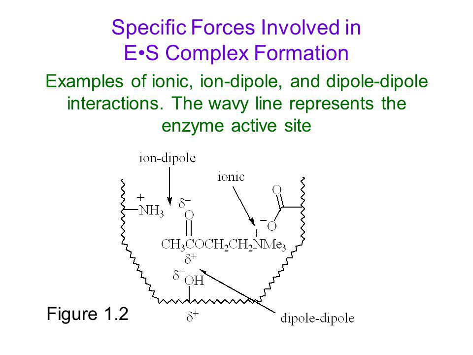 Specific Forces Involved in E•S Complex Formation