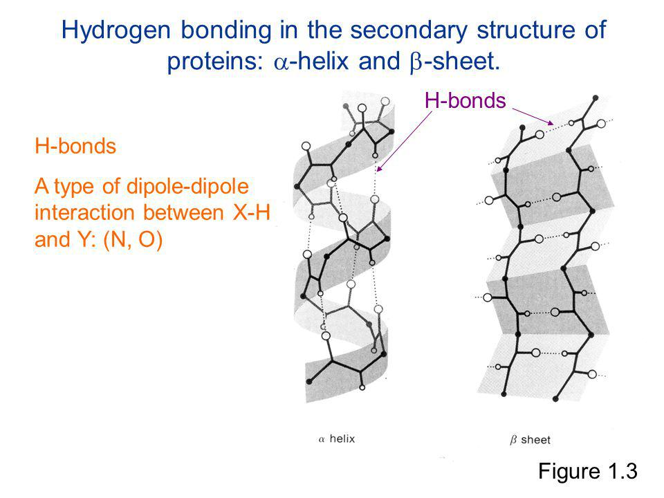 Hydrogen bonding in the secondary structure of proteins: -helix and -sheet.