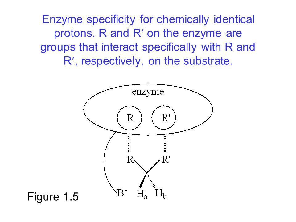 Enzyme specificity for chemically identical protons