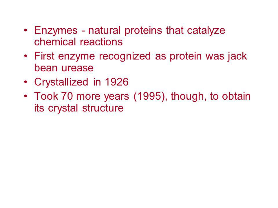 Enzymes - natural proteins that catalyze chemical reactions