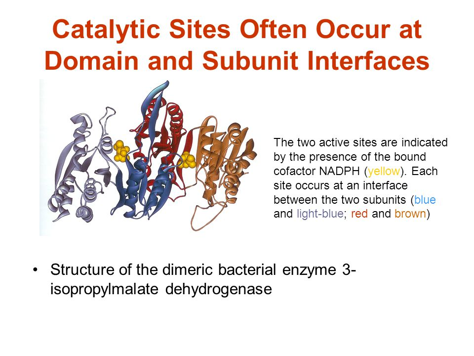 Catalytic Sites Often Occur at Domain and Subunit Interfaces