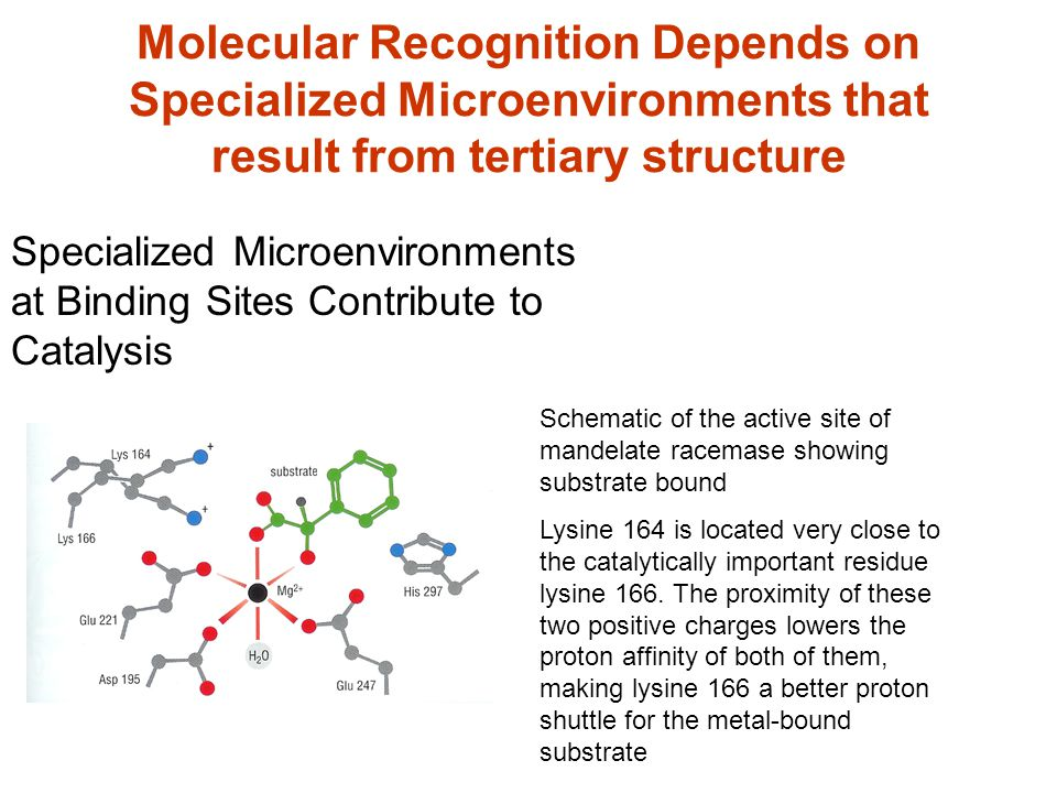 Molecular Recognition Depends on Specialized Microenvironments that result from tertiary structure