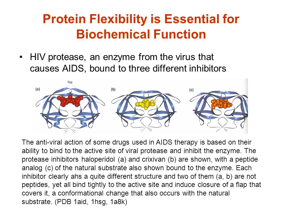 Protein Flexibility is Essential for Biochemical Function