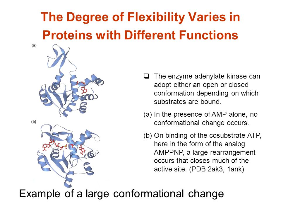 The Degree of Flexibility Varies in Proteins with Different Functions