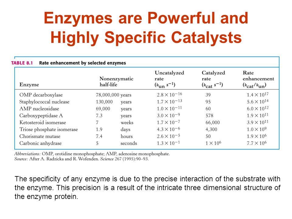 Enzymes are Powerful and Highly Specific Catalysts