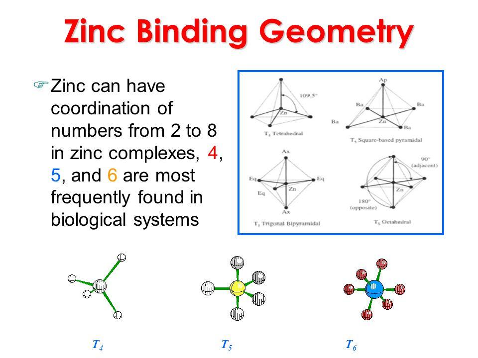 Zinc Binding Geometry