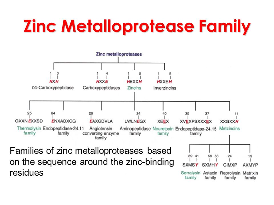 Zinc Metalloprotease Family